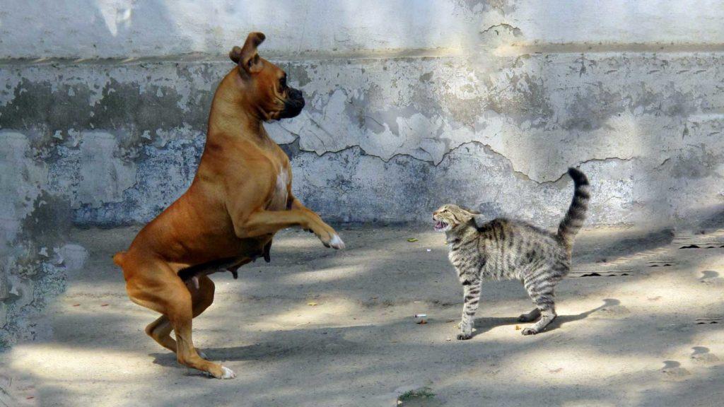 Darstellung autonomes Nervensystem mit Hund und Katze: Sympathikus, Parasympathikus und enterisches Nervensystem