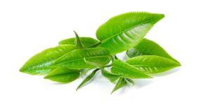 Matcha-Blätter